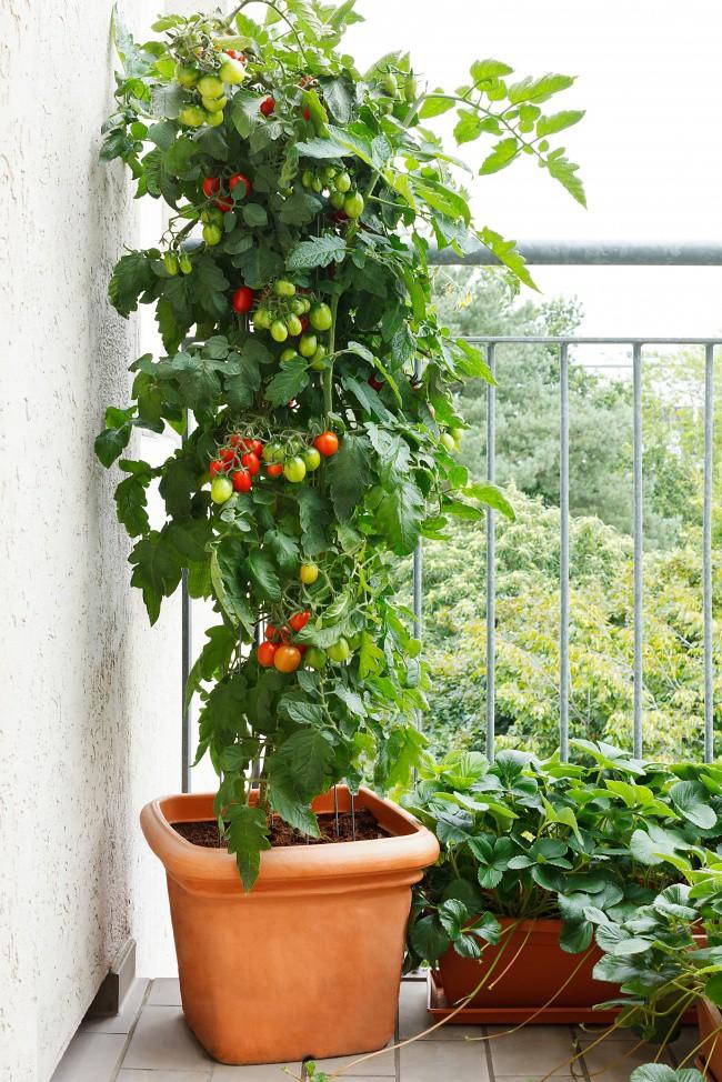 14 ý tưởng đem cây xanh vào nhà không thể cuốn hút hơn - Ảnh 11.