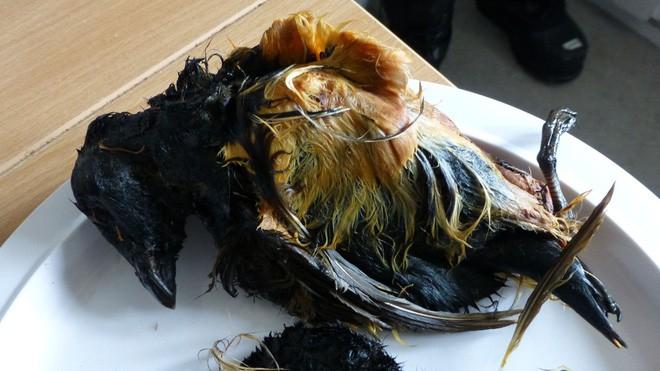 Những món ăn kinh dị còn hơn cả trứng vịt lộn, sầu riêng của Việt Nam - Ảnh 5.