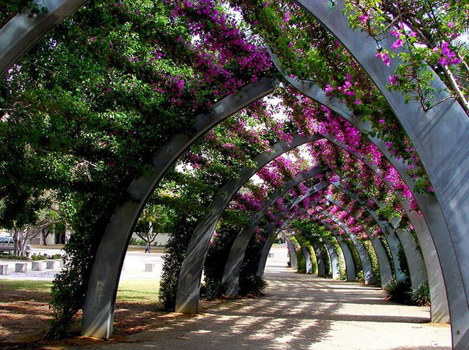 Những con đường phủ đầy hoa tươi như trong truyện cổ tích - Ảnh 6.