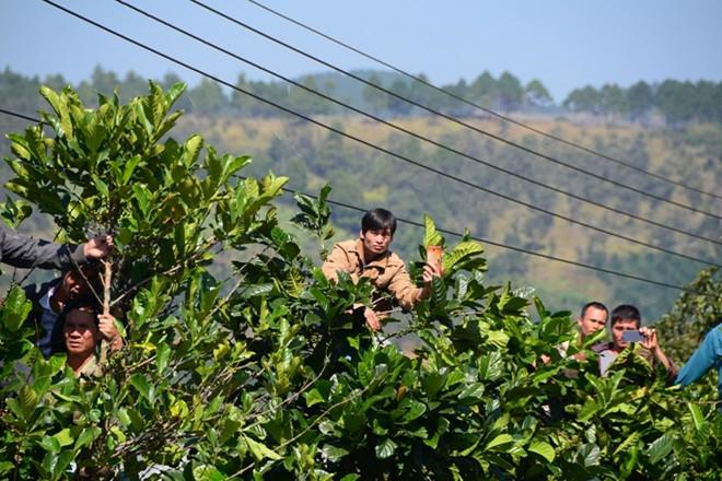 Hàng nghìn người bỏ hái cà phê đi xem dựng lại hiện trường vụ giết người - Ảnh 6.