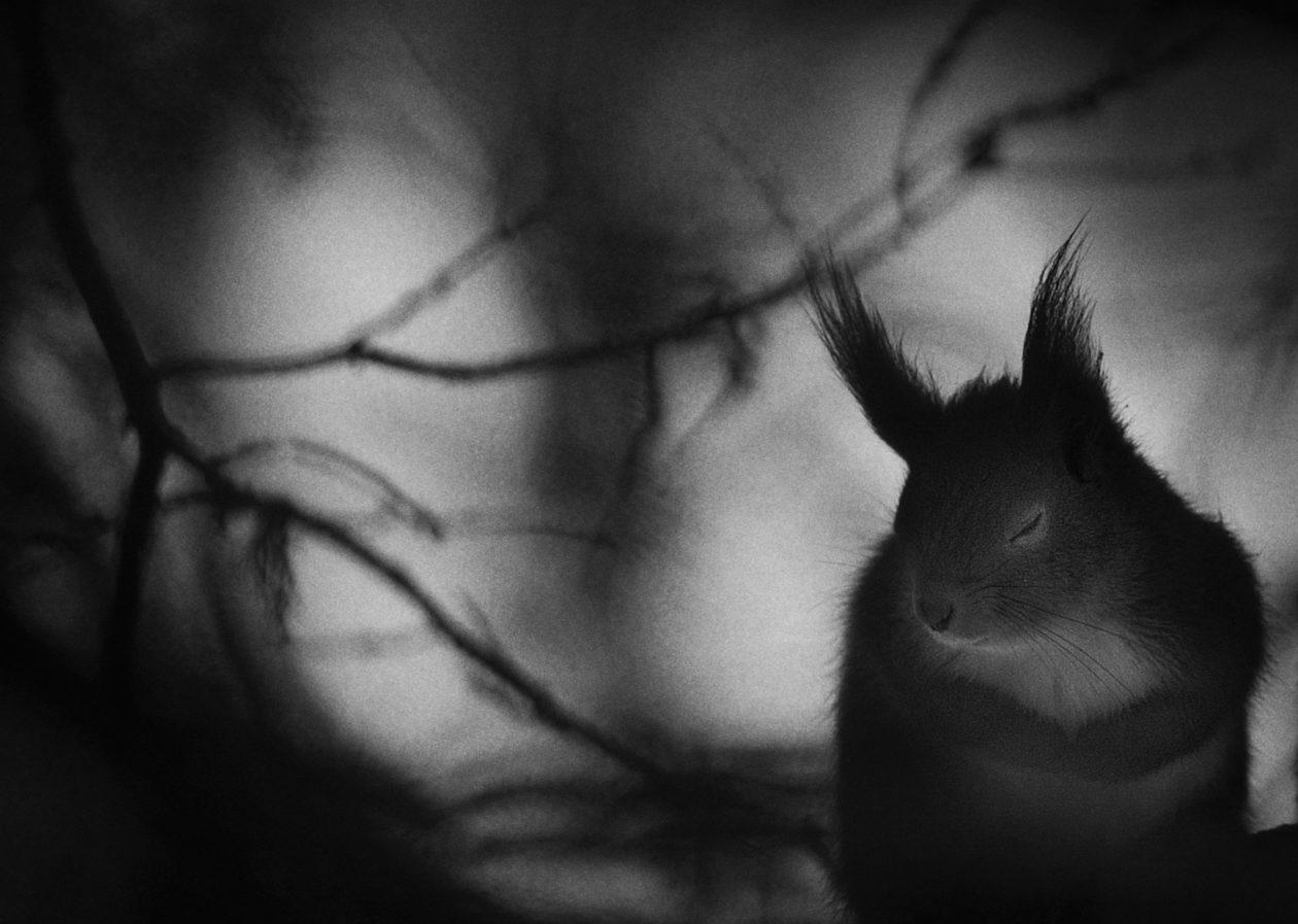 Giải nhất Nhiếp ảnh gia thiên nhiên 2017 cũng là lời cảnh báo cho con người: Cá ngựa và bông ngoáy tai - Ảnh 9.