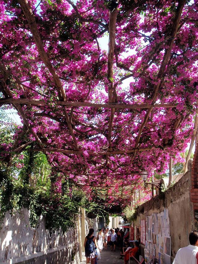 Những con đường phủ đầy hoa tươi như trong truyện cổ tích - Ảnh 9.