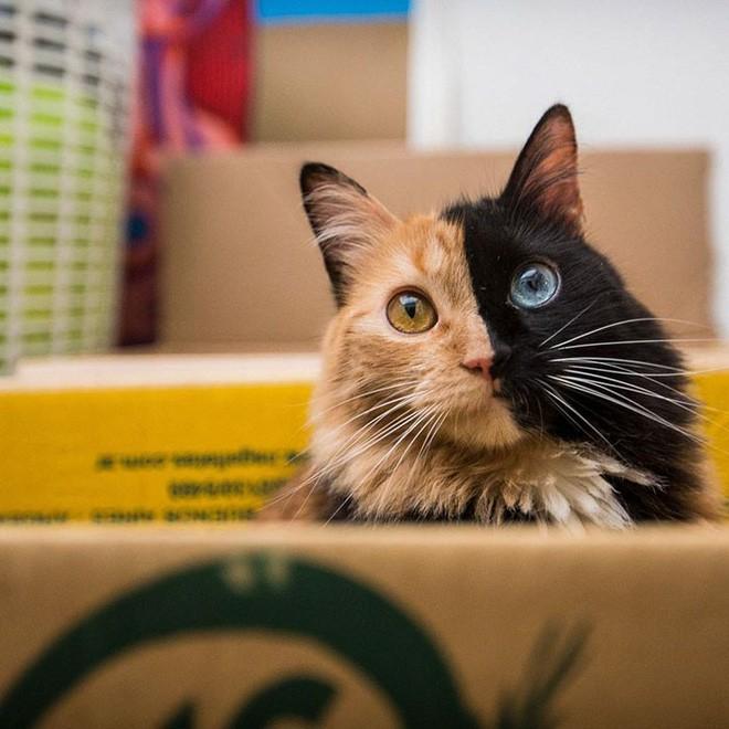 Trông như kết quả của một cuộc tình ngang trái, hóa ra cô mèo đặc biệt này gặp vấn đề về gen - Ảnh 9.
