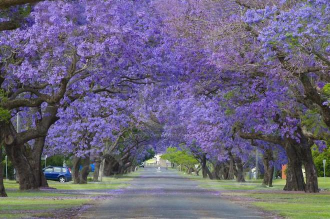 Những con đường phủ đầy hoa tươi như trong truyện cổ tích - Ảnh 10.