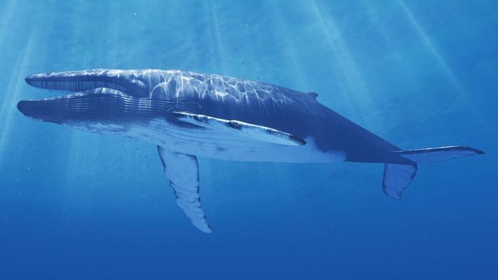 Dù lẻ bóng nhưng vẫn luôn lạc quan sống giống như chú cá voi cô độc nhất hành tinh này - Ảnh 3.