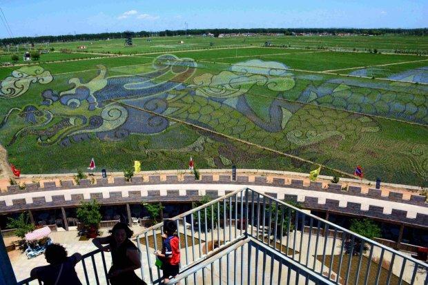Những bức tranh 3D tuyệt đẹp được vẽ trên đồng lúa của nông dân Trung Quốc - Ảnh 4.