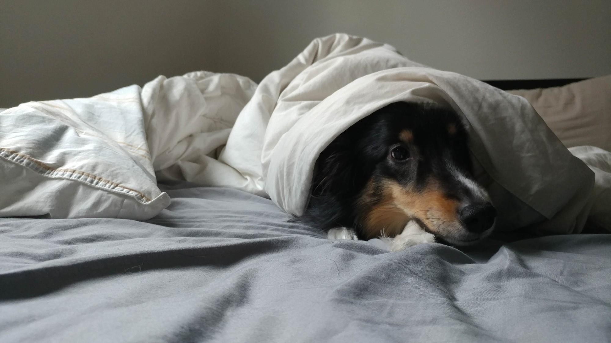 15 chú chó xấu tính chỉ thích độc chiếm một mình một giường mới chịu - Ảnh 21.