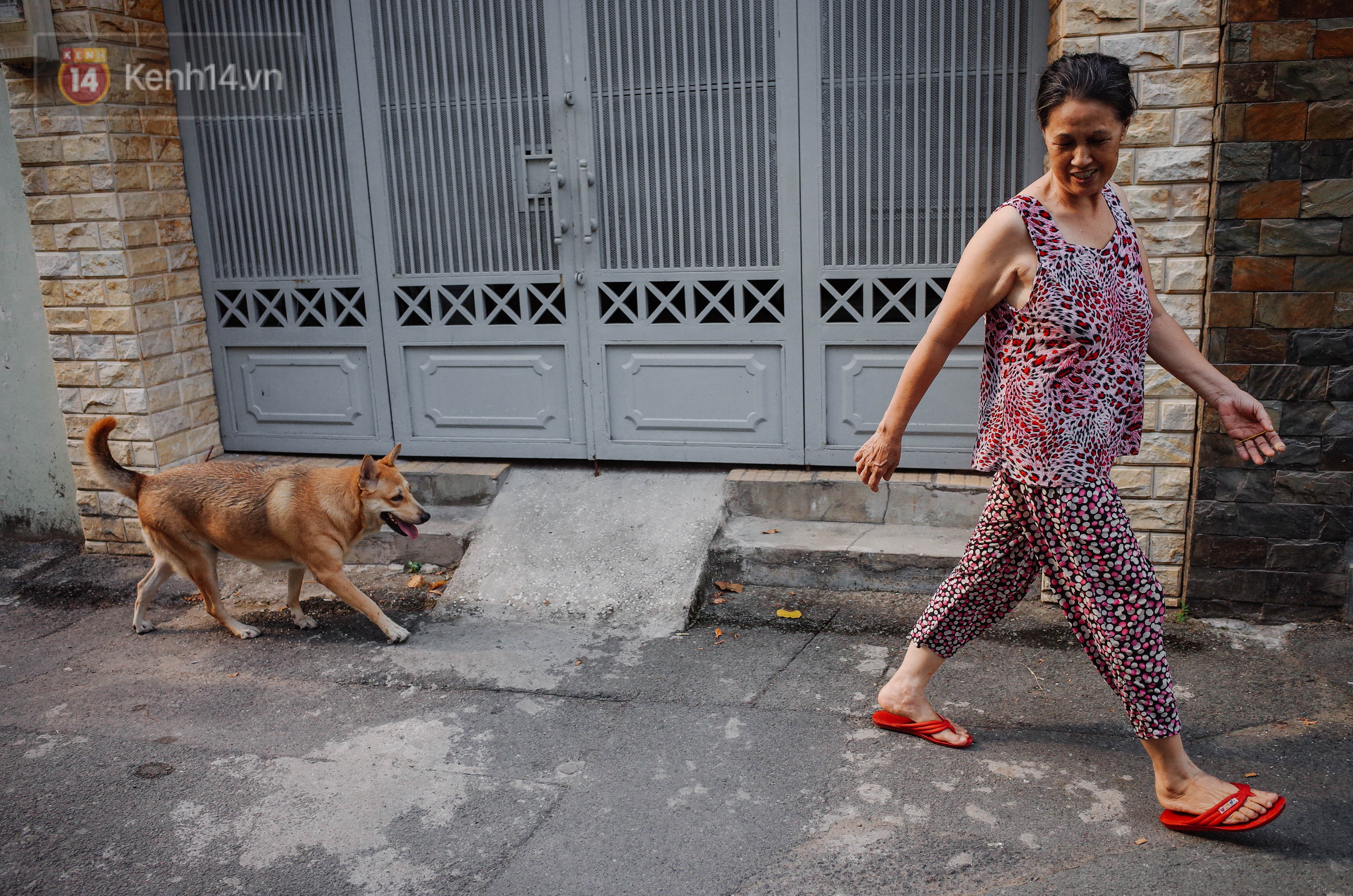 Gặp Gấu - chú chó cá tính nhất Sài Gòn: Chủ mua gì cũng xung phong xách hộ, không cho theo thì hờn mát bỏ ăn! - Ảnh 6.