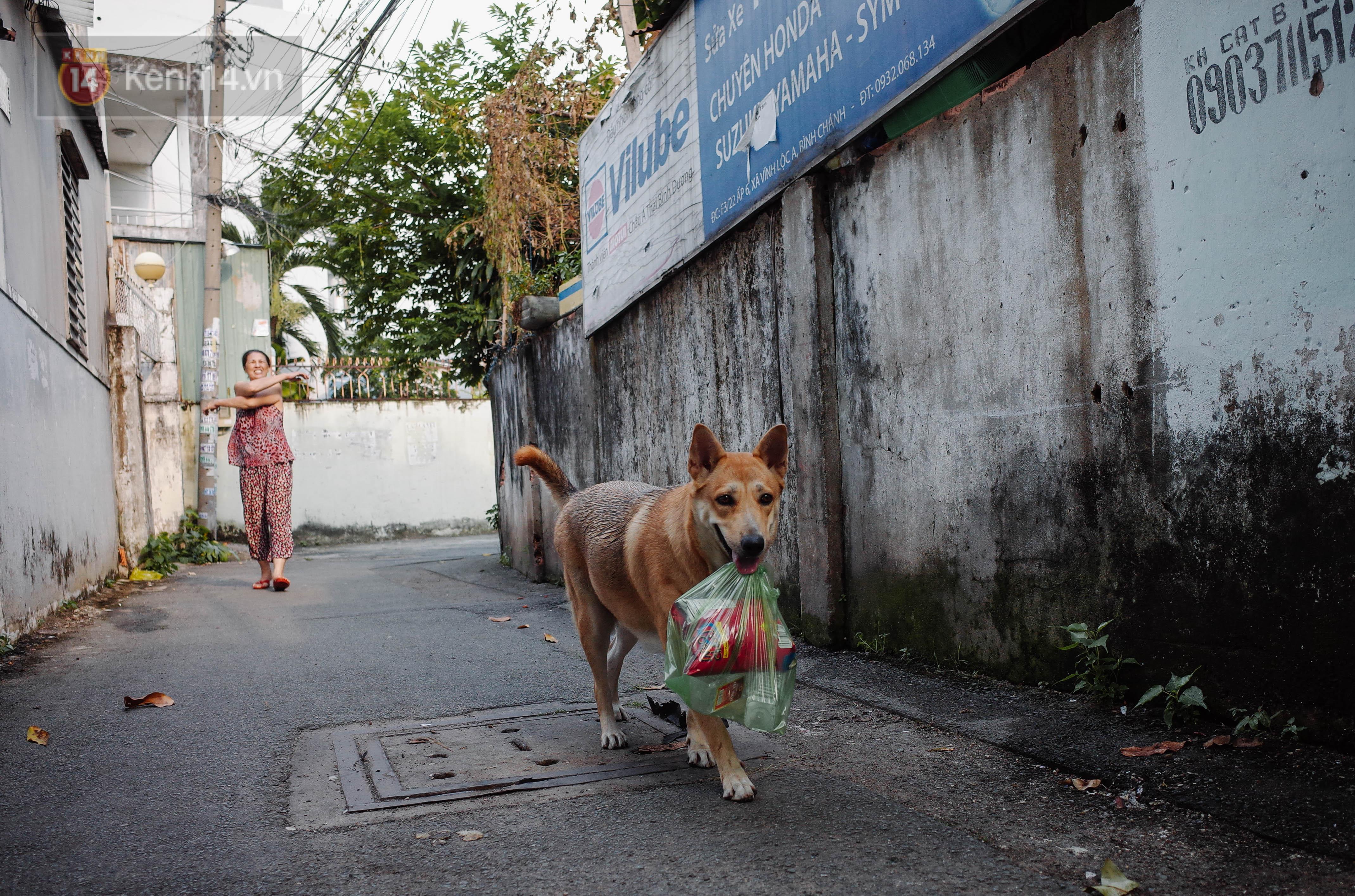 Gặp Gấu - chú chó cá tính nhất Sài Gòn: Chủ mua gì cũng xung phong xách hộ, không cho theo thì hờn mát bỏ ăn! - Ảnh 3.