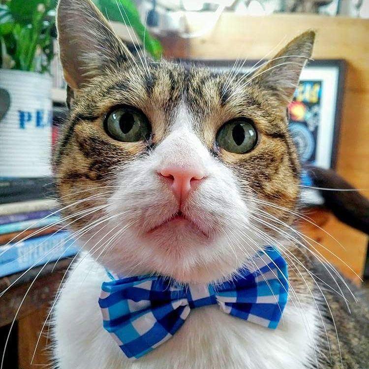 15 chú mèo bảnh trai ăn diện nhất trong ngày quốc tế mèo - Ảnh 13.