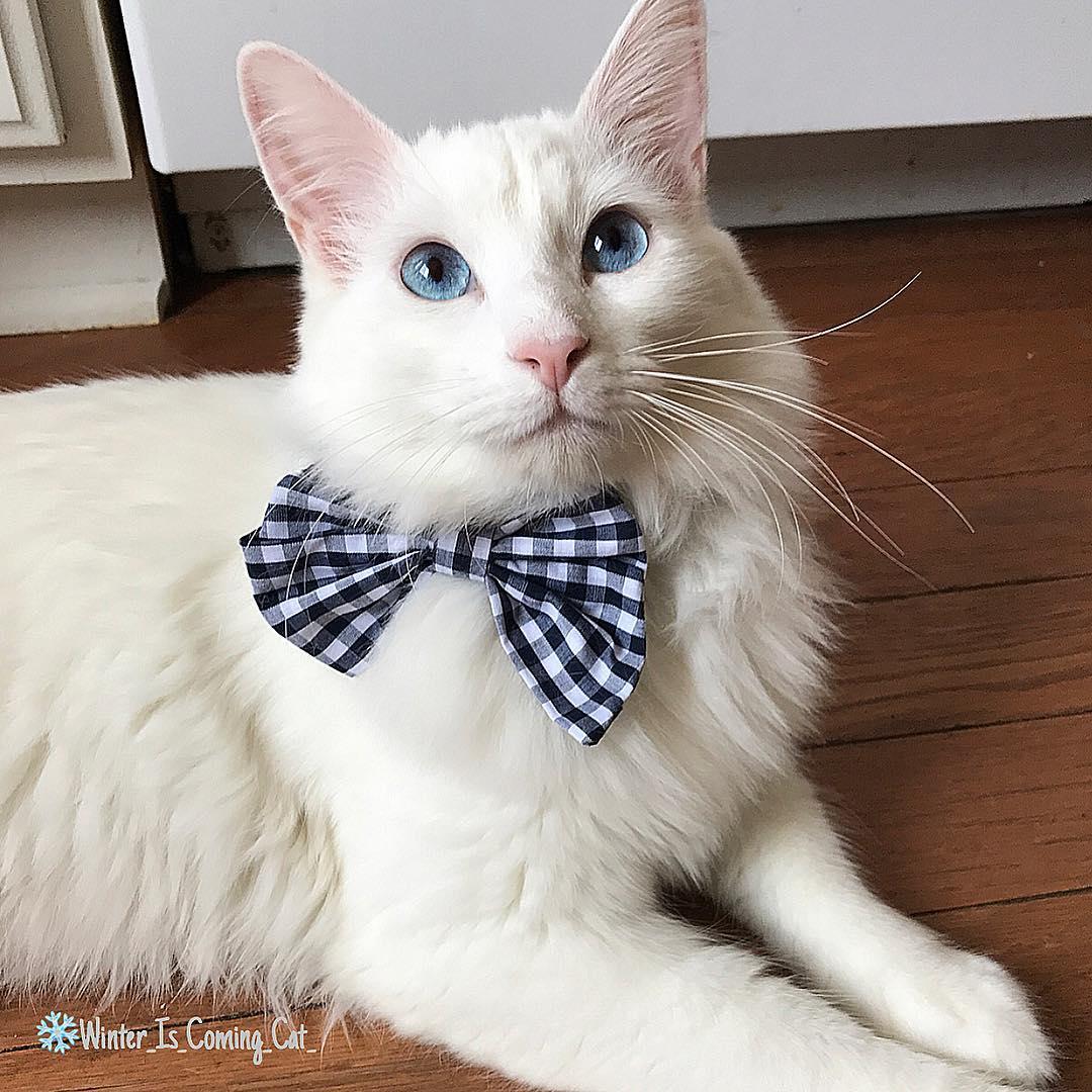 15 chú mèo bảnh trai ăn diện nhất trong ngày quốc tế mèo - Ảnh 3.