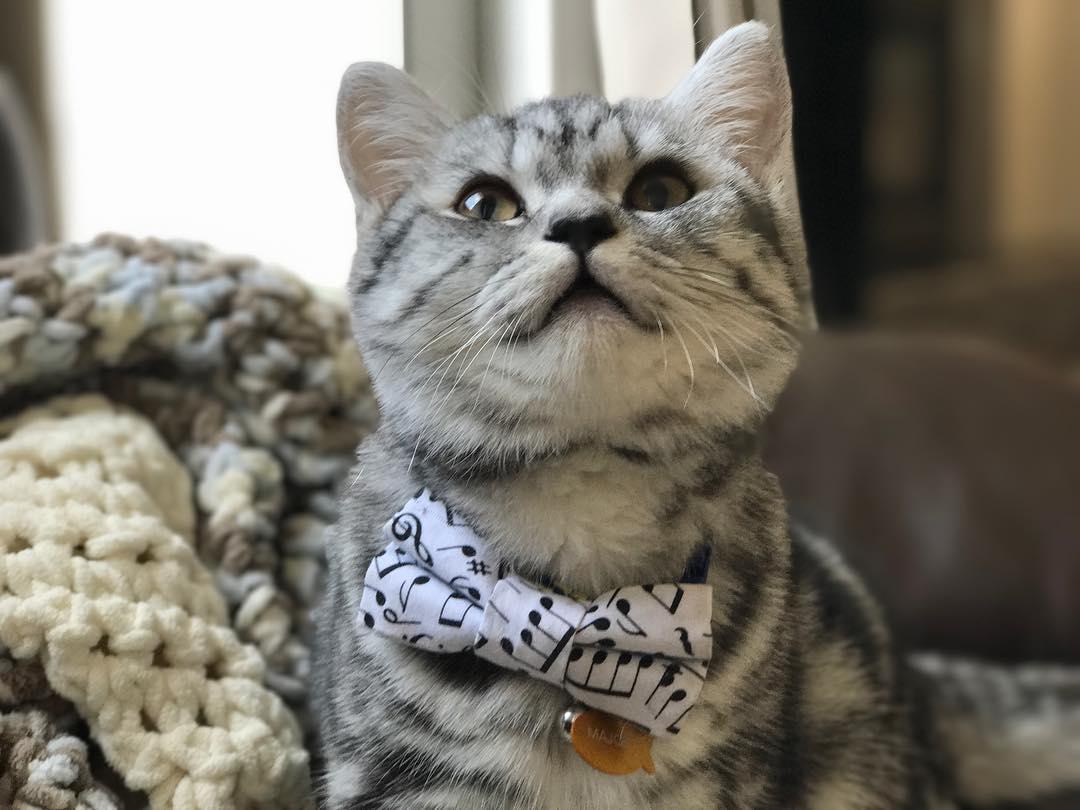 15 chú mèo bảnh trai ăn diện nhất trong ngày quốc tế mèo - Ảnh 23.