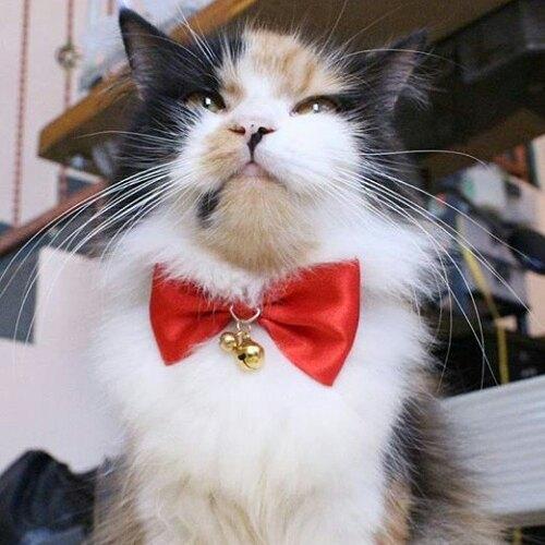 15 chú mèo bảnh trai ăn diện nhất trong ngày quốc tế mèo - Ảnh 21.