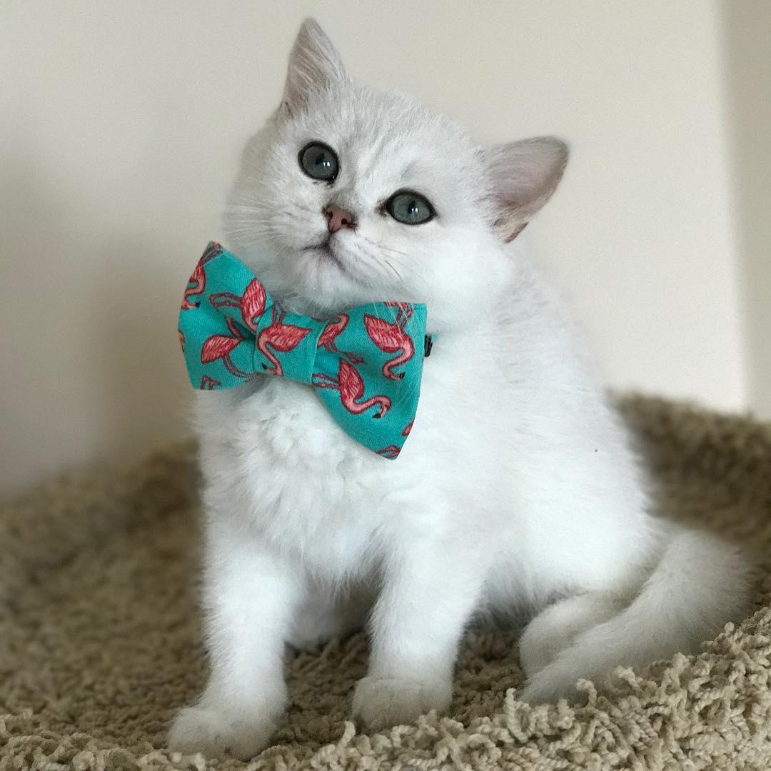 15 chú mèo bảnh trai ăn diện nhất trong ngày quốc tế mèo - Ảnh 19.
