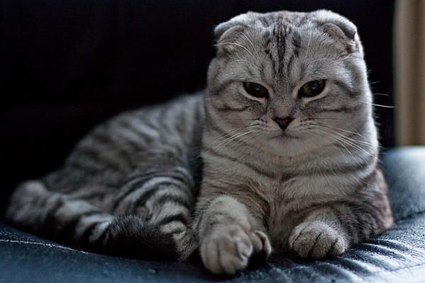 Người nuôi chó mèo buộc phải nắm vững những quy tắc này trước khi quyết định phối giống
