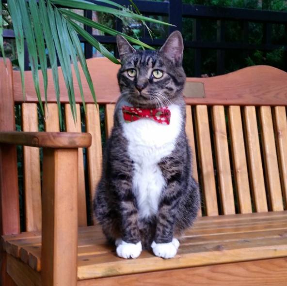 15 chú mèo bảnh trai ăn diện nhất trong ngày quốc tế mèo - Ảnh 27.