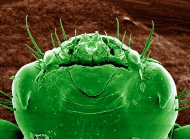 Đây là bộ mặt thật của sinh vật đang sống quanh ta khiến ai xem cũng muốn xỉu - Ảnh 3.