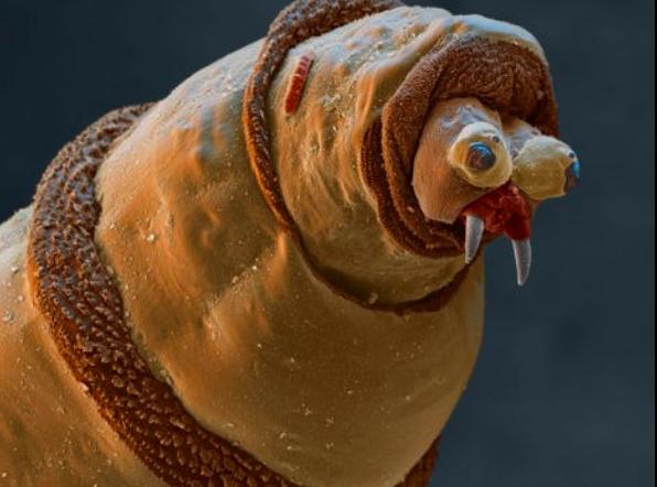 Đây là bộ mặt thật của sinh vật đang sống quanh ta khiến ai xem cũng muốn xỉu - Ảnh 10.