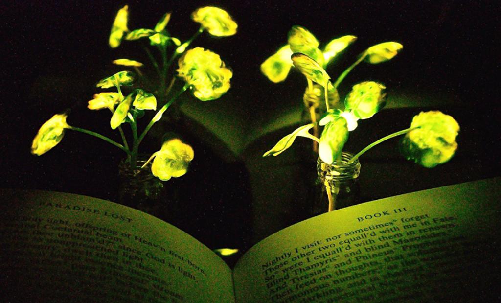 Vào mà xem, lá cây có thể phát sáng và người ta sắp trồng cây thay cho đèn đường rồi đây này - Ảnh 1.