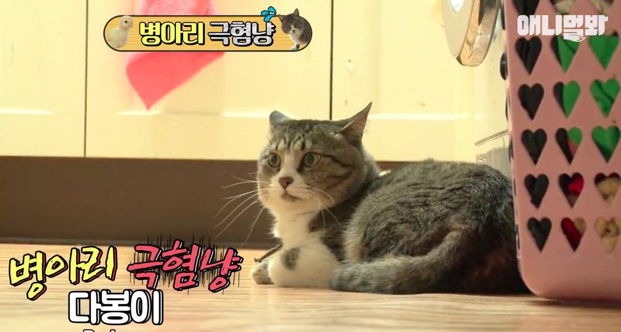 Chú mèo nổi tiếng cả Hàn Quốc vì dành cả thanh xuân để sợ gà - Ảnh 4.