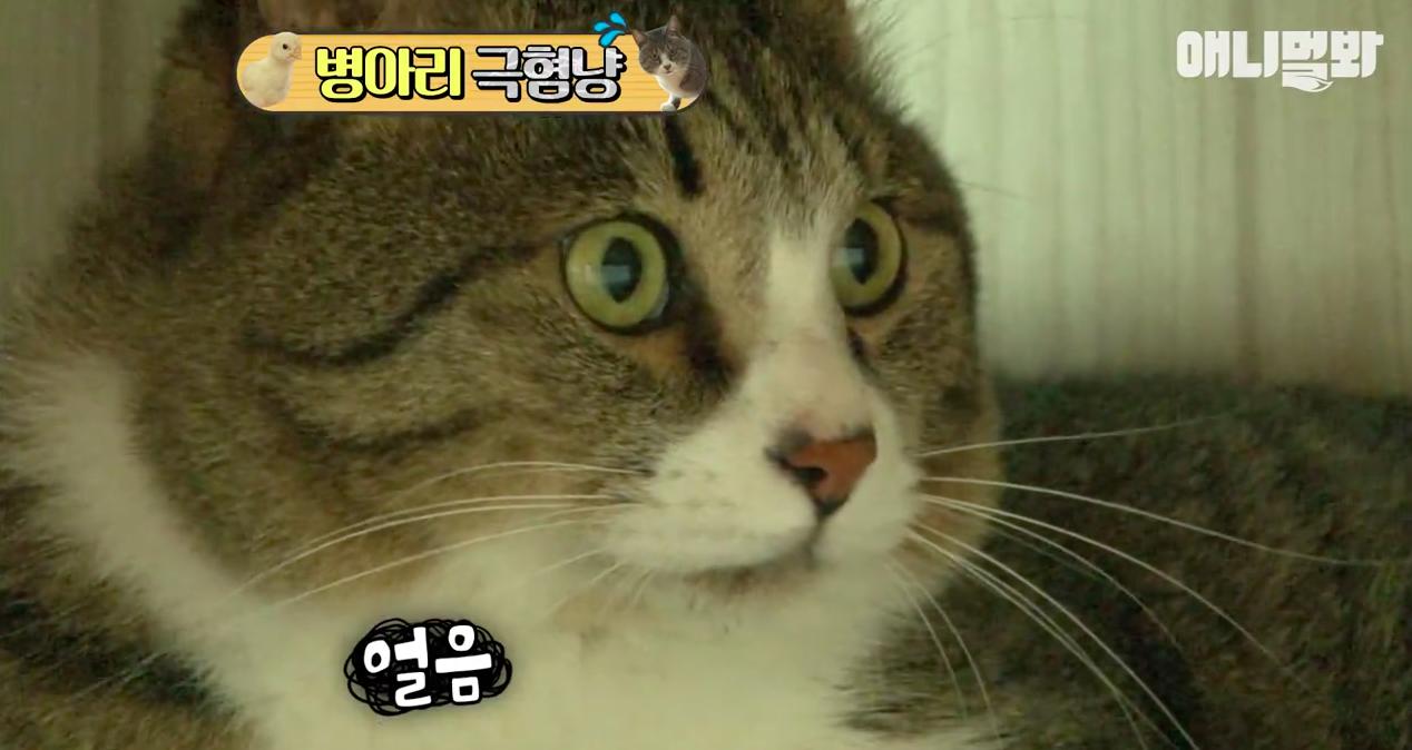 Chú mèo nổi tiếng cả Hàn Quốc vì dành cả thanh xuân để sợ gà - Ảnh 5.