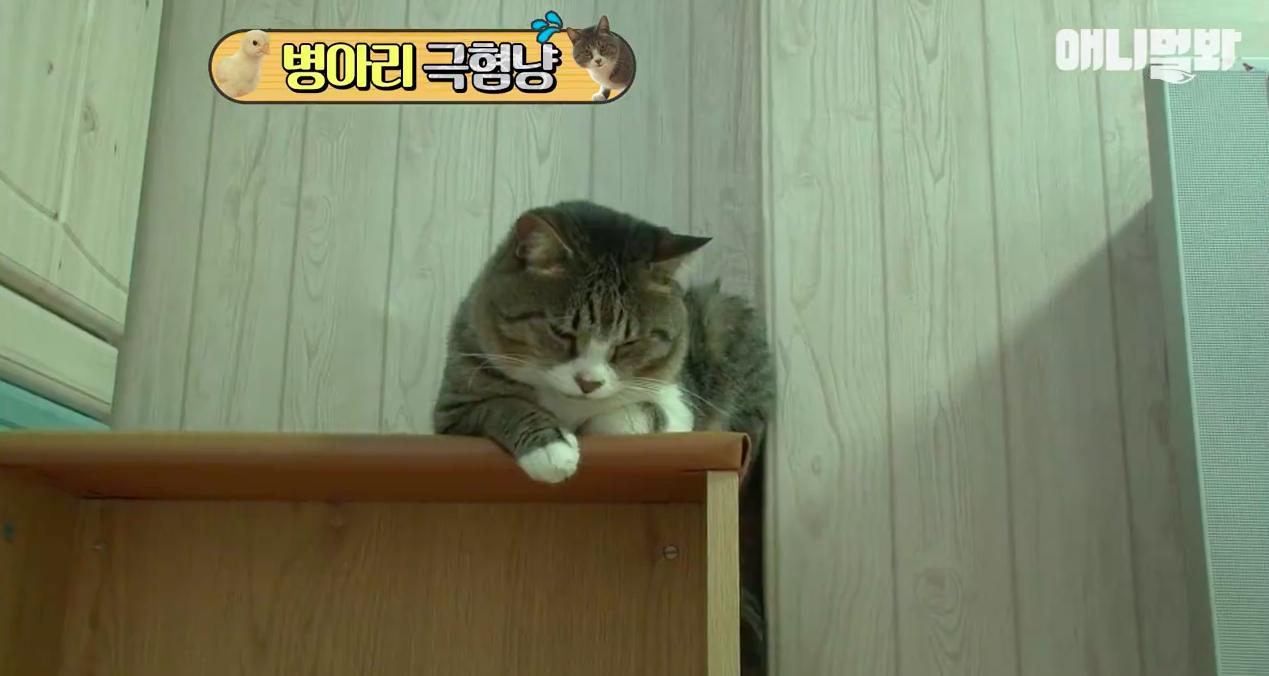 Chú mèo nổi tiếng cả Hàn Quốc vì dành cả thanh xuân để sợ gà - Ảnh 6.