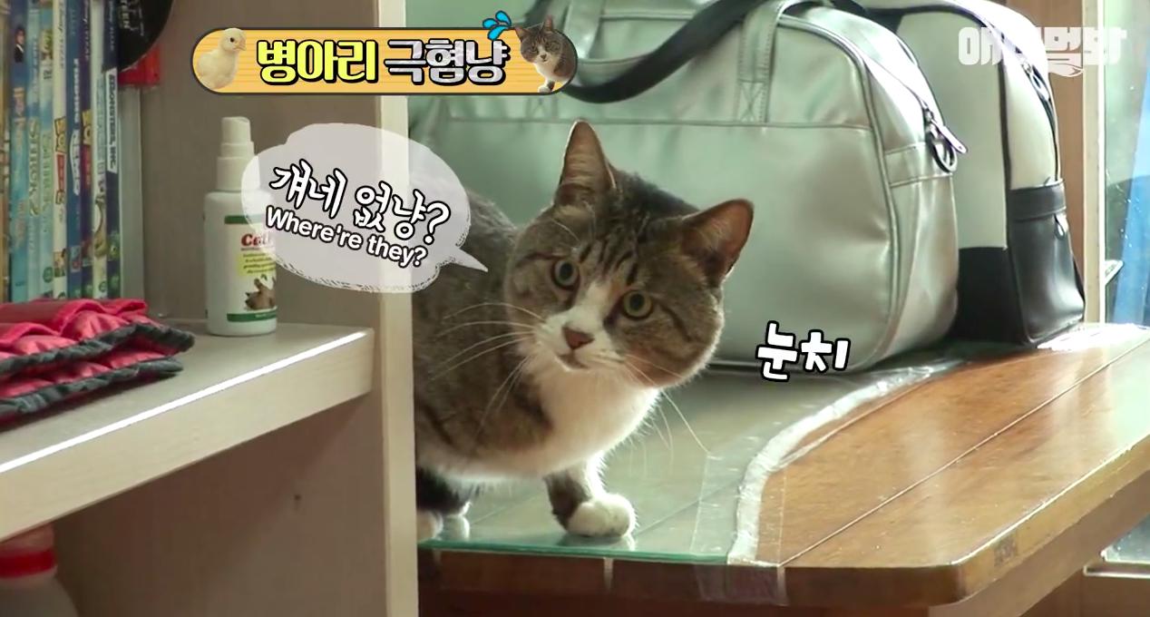 Chú mèo nổi tiếng cả Hàn Quốc vì dành cả thanh xuân để sợ gà - Ảnh 7.