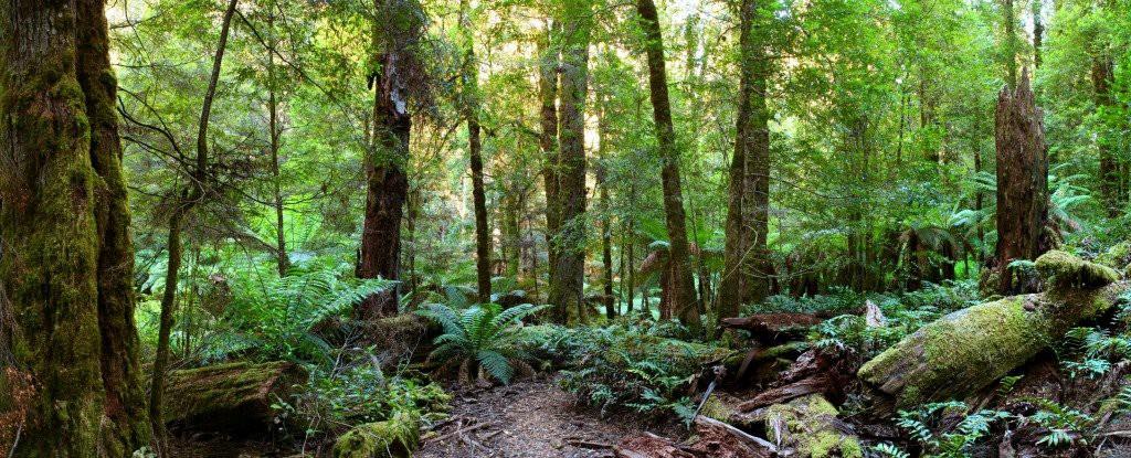 Tìm ra loài cây có siêu năng lực, có thể khử được cả chất phóng xạ - Ảnh 2.