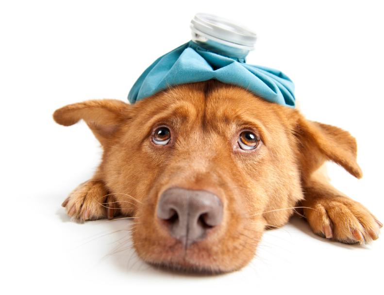 Đây là lý do chó nhà bạn chưng ra bộ mặt này sau mỗi lần phá phách - Ảnh 3.