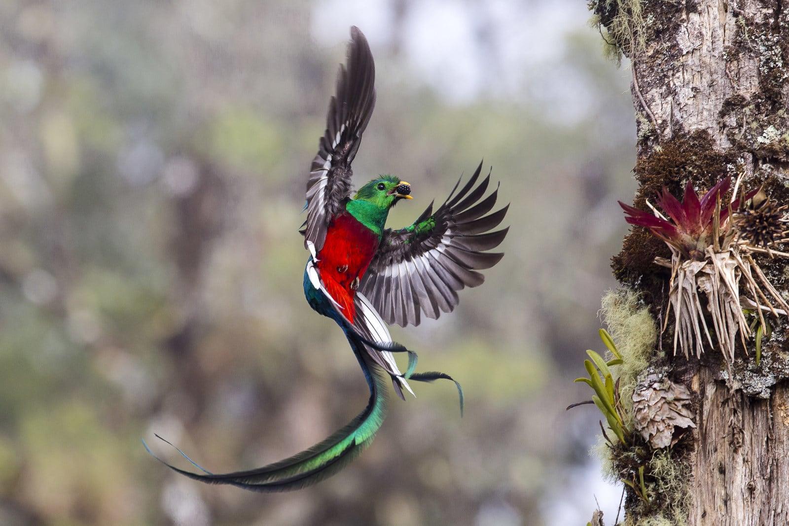 Chùm ảnh thiên nhiên đẹp nhất năm 2017 và thông điệp đau lòng phía sau bức hình đạt giải - Ảnh 1.