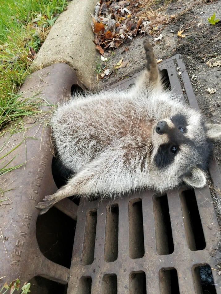 15 tình huống mắc kẹt éo le của bè lũ động vật mắc chứng ngã cây - Ảnh 1.