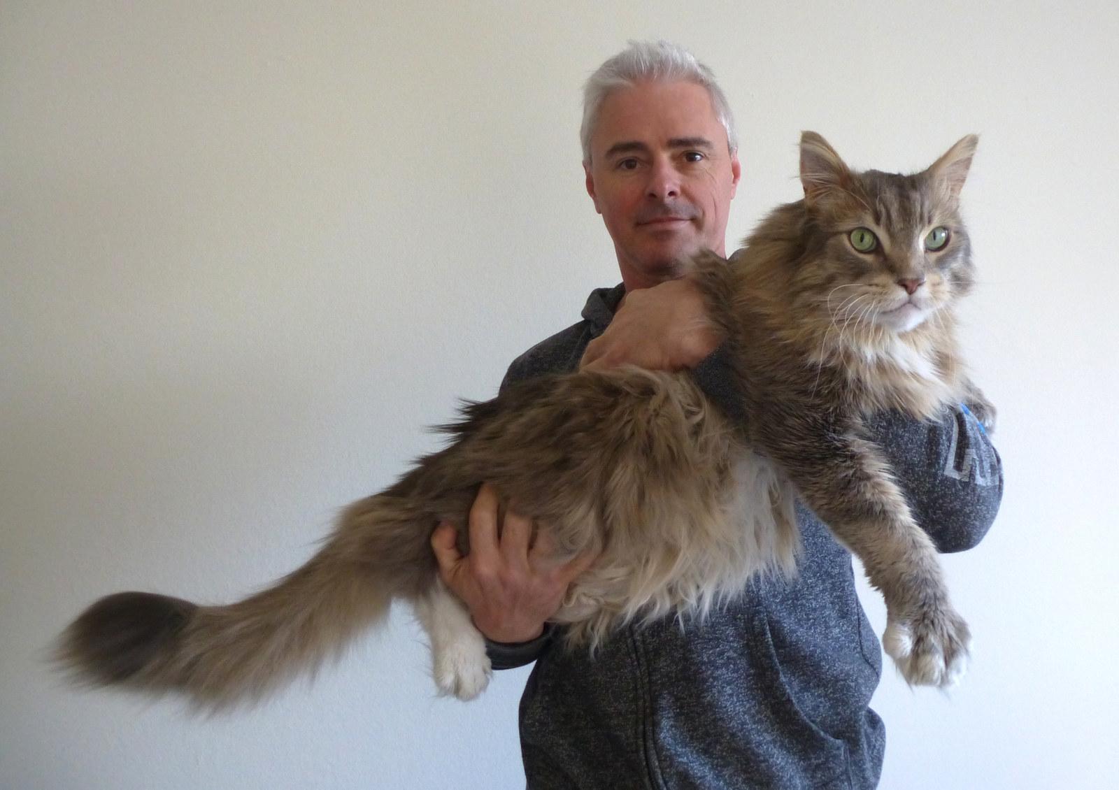 Chân dung 17 con mèo to xác khiến con người cũng phát hoảng - Ảnh 21.