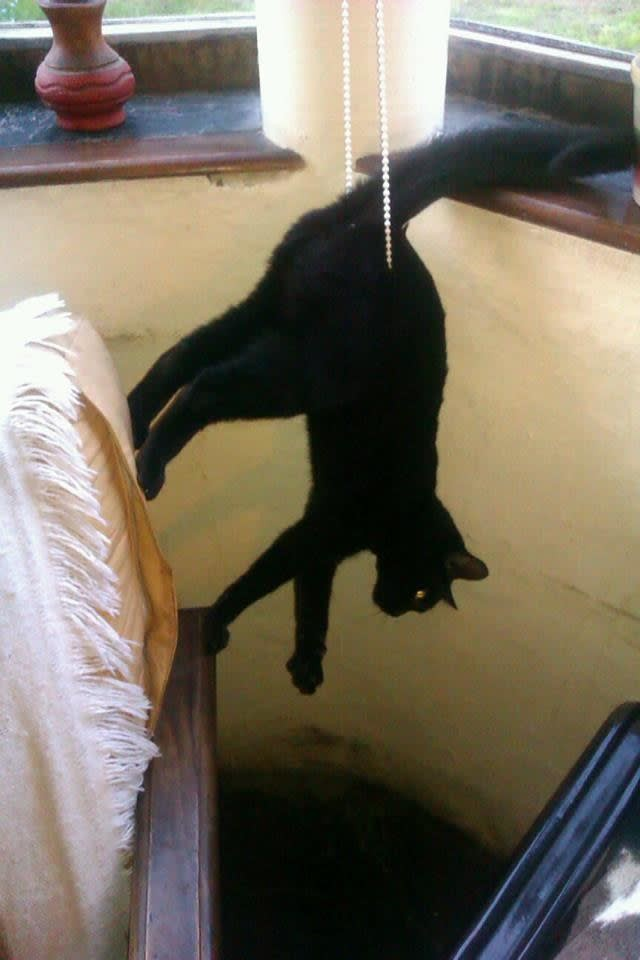 15 tình huống mắc kẹt éo le của bè lũ động vật mắc chứng ngã cây - Ảnh 5.