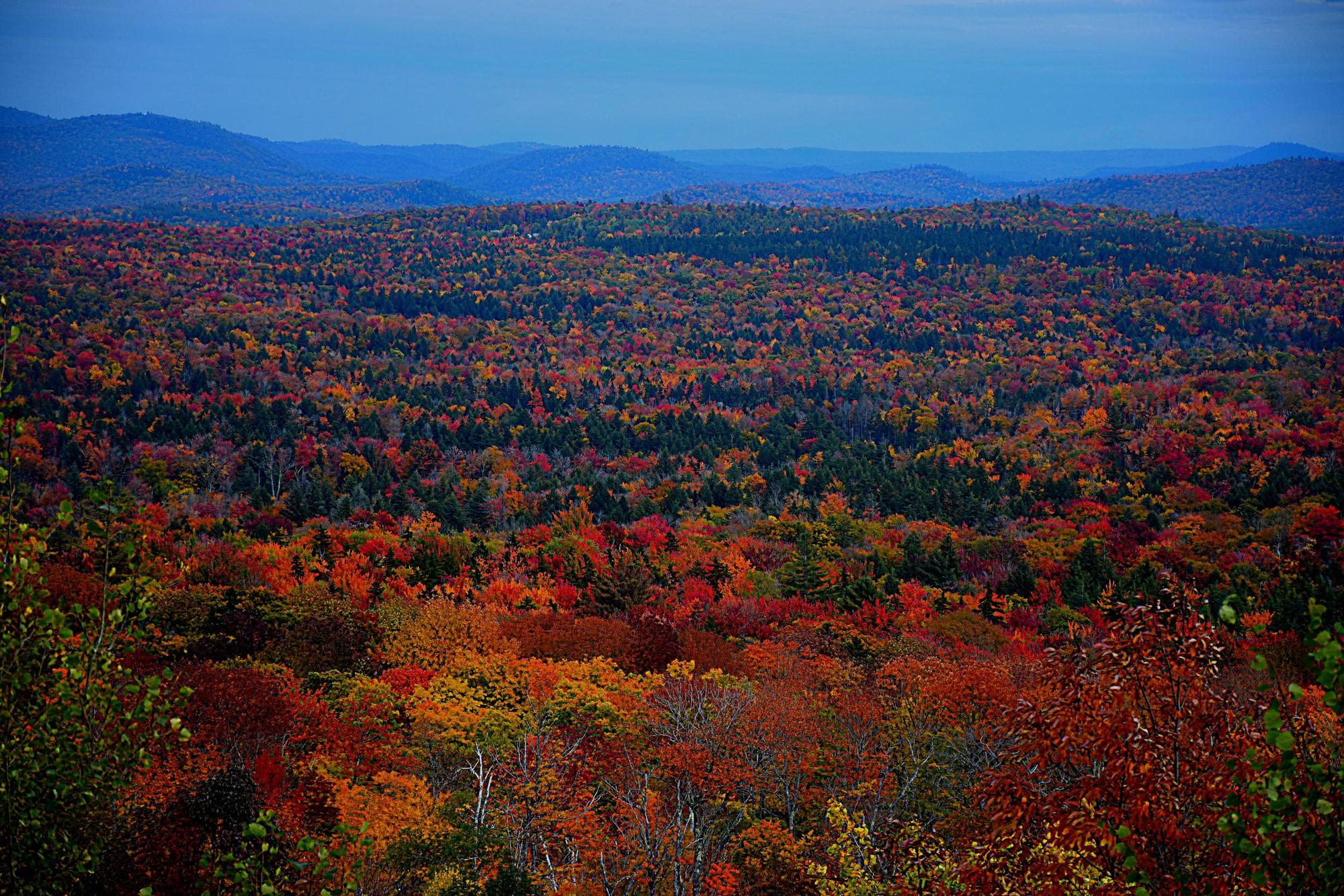 Ngắm phong cảnh đẹp đến ngoạn mục của những khu rừng vào mùa thu - Ảnh 22.