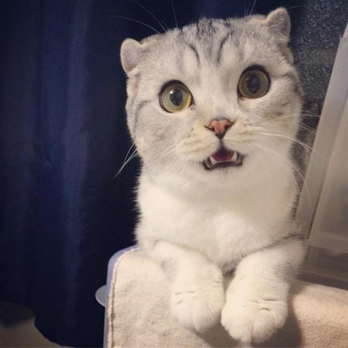 Bấn loạn với chú mèo đáng yêu có đôi mắt long lanh như đeo lens - Ảnh 17.