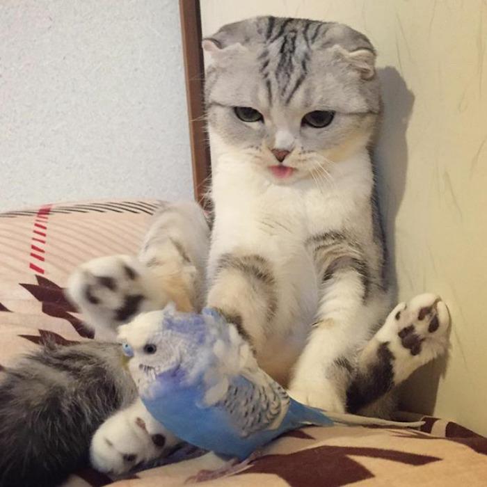 Bấn loạn với chú mèo đáng yêu có đôi mắt long lanh như đeo lens - Ảnh 19.