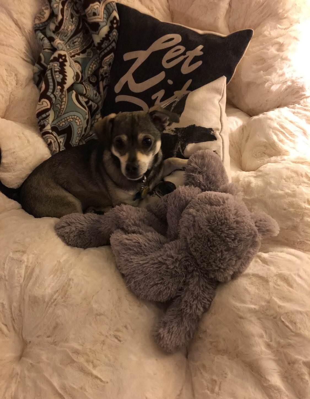 15 chú chó xấu tính chỉ thích độc chiếm một mình một giường mới chịu - Ảnh 23.