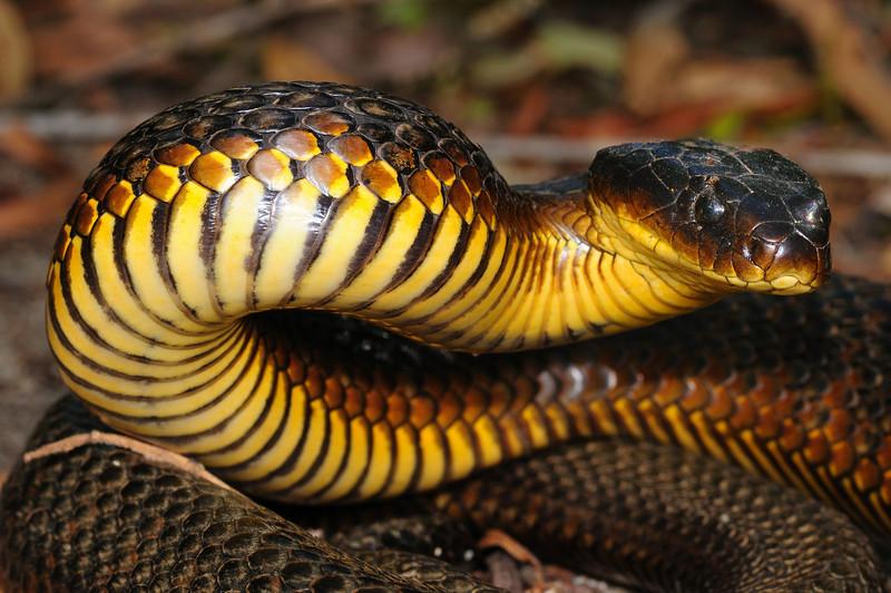 Loài rắn này sở hữu loại độc tố mạnh đến mức 10 triệu năm không cần tiến hóa - Ảnh 2.
