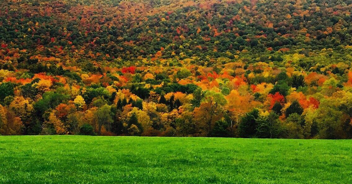 Ngắm phong cảnh đẹp đến ngoạn mục của những khu rừng vào mùa thu - Ảnh 9.
