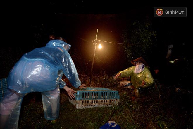 Chùm ảnh: Người dân sơ tán tài sản, vật nuôi trong đêm do nước tràn bờ tại Chương Mỹ, Hà Nội - Ảnh 11.