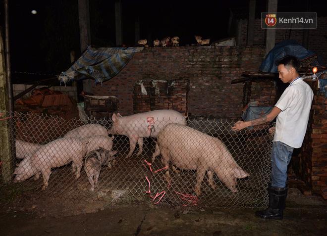 Chùm ảnh: Người dân sơ tán tài sản, vật nuôi trong đêm do nước tràn bờ tại Chương Mỹ, Hà Nội - Ảnh 12.
