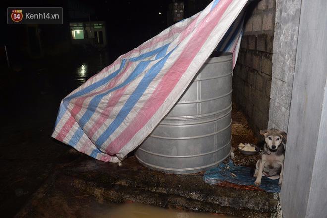 Chùm ảnh: Người dân sơ tán tài sản, vật nuôi trong đêm do nước tràn bờ tại Chương Mỹ, Hà Nội - Ảnh 4.