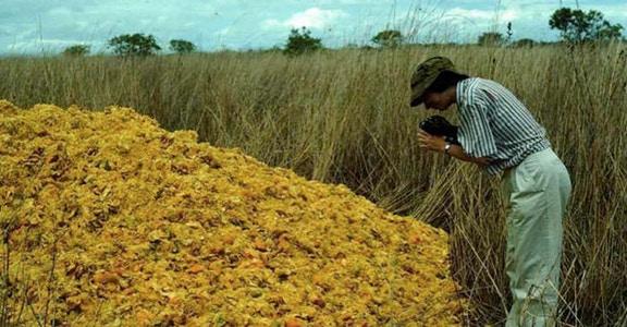 Một công ty nước ép đổ 12.000 tấn vỏ cam xuống khu bảo tồn thiên nhiên, 19 năm sau, đây là kết quả họ đạt được - Ảnh 2.
