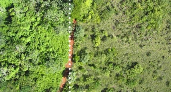 Một công ty nước ép đổ 12.000 tấn vỏ cam xuống khu bảo tồn thiên nhiên, 19 năm sau, đây là kết quả họ đạt được - Ảnh 3.