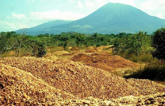 Một công ty nước ép đổ 12.000 tấn vỏ cam xuống khu bảo tồn thiên nhiên, 19 năm sau, đây là kết quả họ đạt được - Ảnh 1.