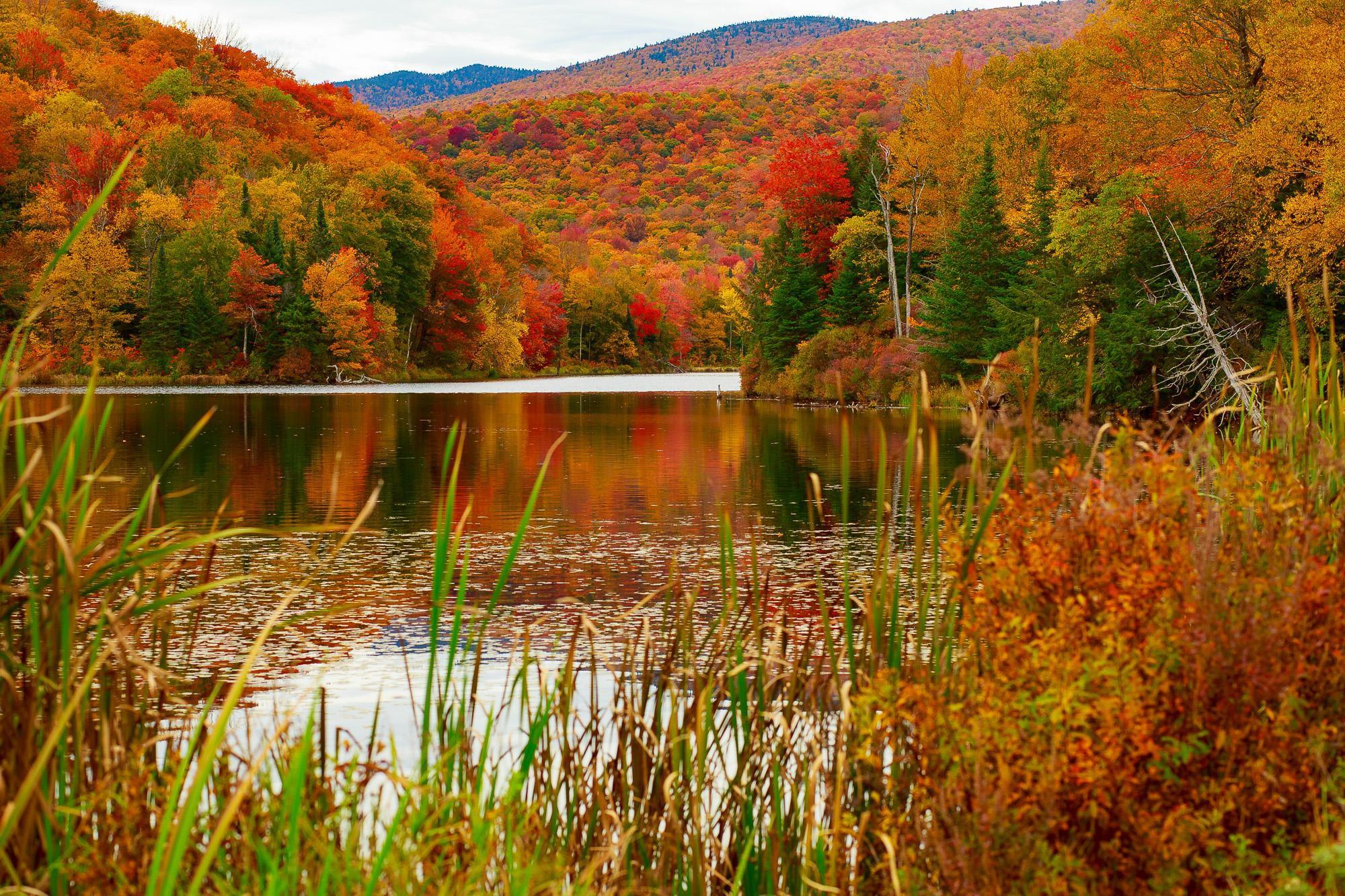 Ngắm phong cảnh đẹp đến ngoạn mục của những khu rừng vào mùa thu - Ảnh 26.