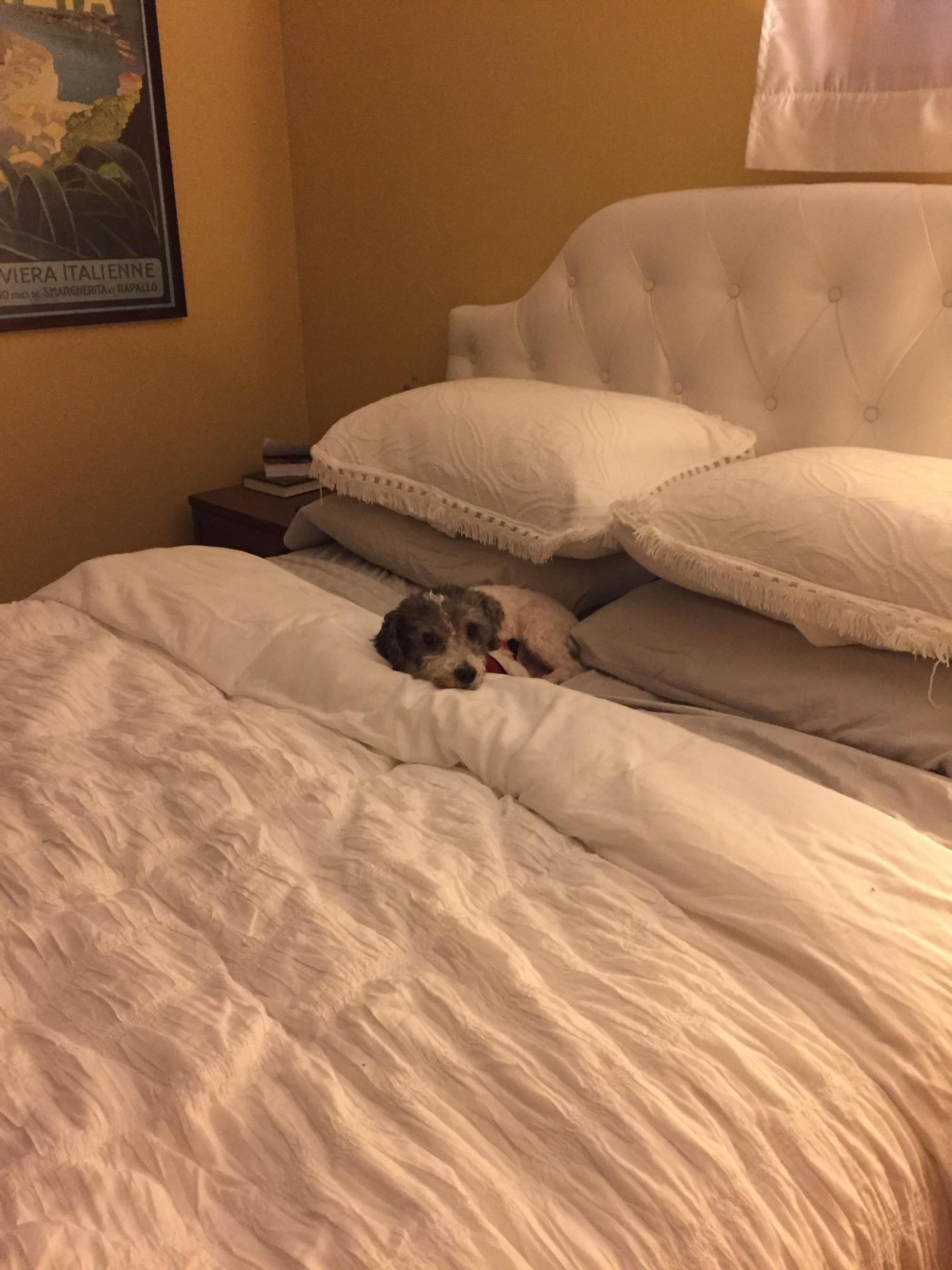 15 chú chó xấu tính chỉ thích độc chiếm một mình một giường mới chịu - Ảnh 5.