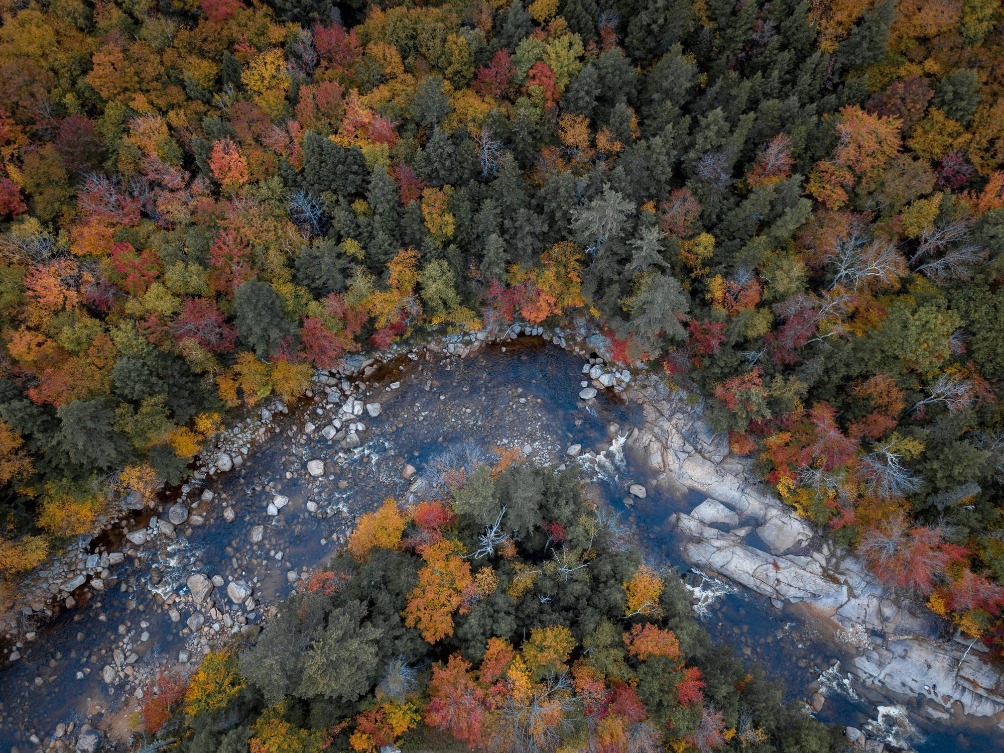 Ngắm phong cảnh đẹp đến ngoạn mục của những khu rừng vào mùa thu - Ảnh 18.