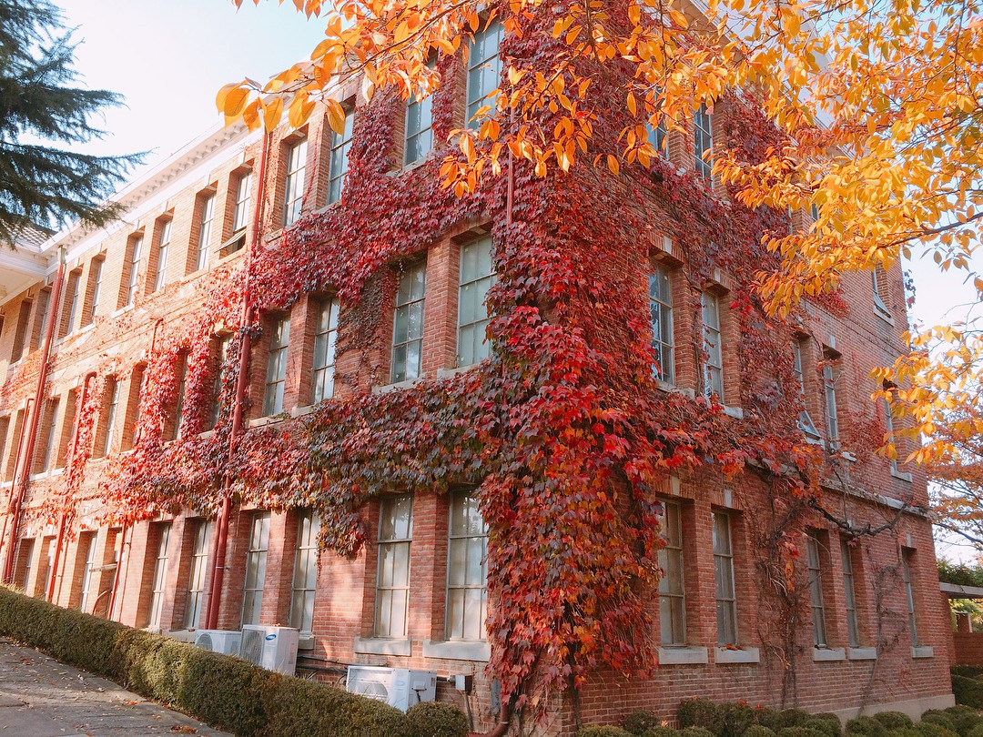 Hơn 100 phim Hàn đều chọn ngôi trường đại học tuyệt đẹp này làm bối cảnh ghi hình - Ảnh 12.