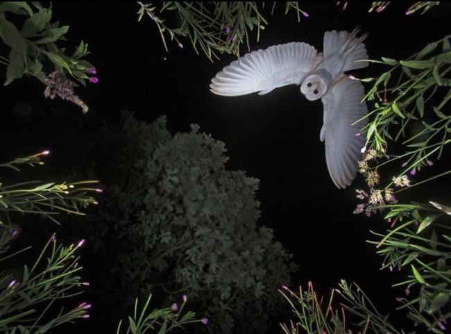 Nín thở trước 16 khung cảnh vi diệu của thiên nhiên hùng vĩ - Ảnh 1.